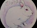 Clara-the-Bunny